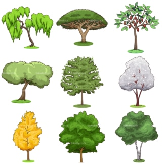 Common trees. PNG - JPG and infinitely scalable vector EPS - on white or transparent background.