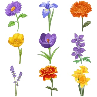 Common flowers 1. PNG - JPG and infinitely scalable vector EPS - on white or transparent background.
