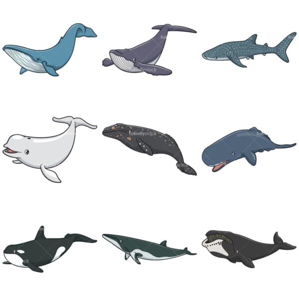 Whale species. PNG - JPG and infinitely scalable vector EPS - on white or transparent background.
