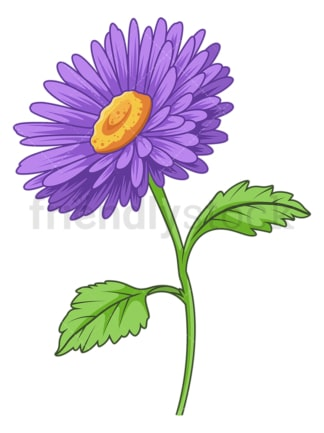 Aster flower. PNG - JPG and vector EPS (infinitely scalable).