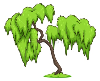 Weeping willow tree. PNG - JPG and vector EPS (infinitely scalable).