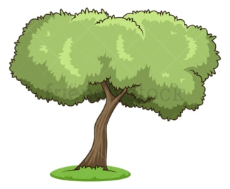 Olive tree. PNG - JPG and vector EPS (infinitely scalable).