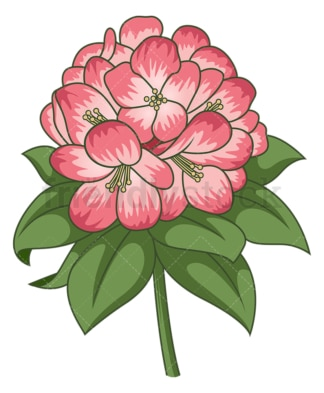 Rhododendron flower. PNG - JPG and vector EPS (infinitely scalable).