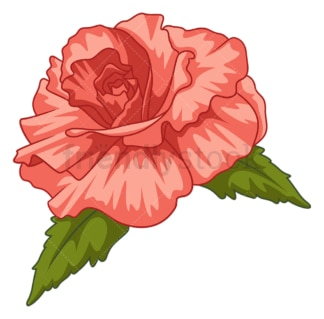 Begonia flower. PNG - JPG and vector EPS (infinitely scalable).