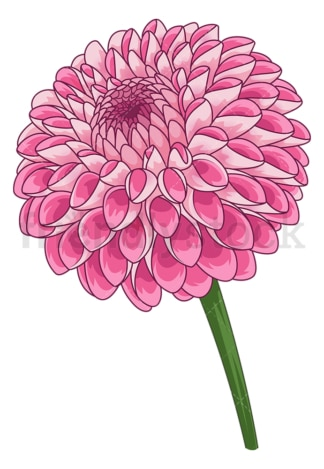 Dahlia flower. PNG - JPG and vector EPS (infinitely scalable).