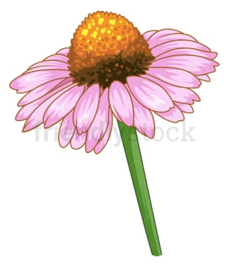 Coneflower flower. PNG - JPG and vector EPS (infinitely scalable).