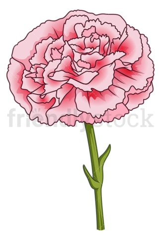 Carnation flower. PNG - JPG and vector EPS (infinitely scalable).