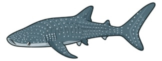 Whale shark. PNG - JPG and vector EPS (infinitely scalable).