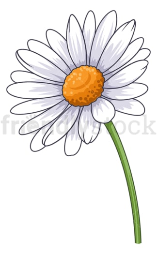 Common daisy flower. PNG - JPG and vector EPS (infinitely scalable).
