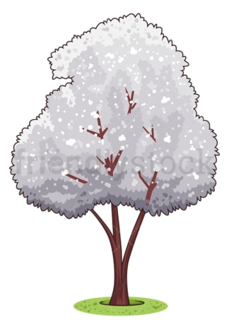 Magnolia kobus tree. PNG - JPG and vector EPS (infinitely scalable).