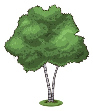 Birch tree. PNG - JPG and vector EPS (infinitely scalable).