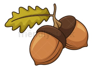 Pair acorn. PNG - JPG and vector EPS file formats (infinitely scalable). Image isolated on transparent background.